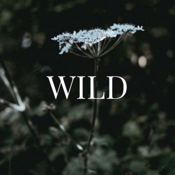 Candace Coker - Wild...